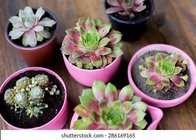 succulents in diy concrete pots painted in pink on wood table background
