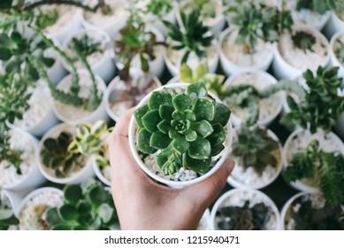 Succulents floer detailon spring