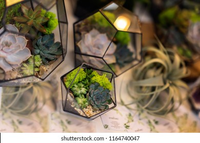 Succulents in florariums. Creativity of growing succulents and cacti, beautiful compositions. Landscape in a geomeric aquarium