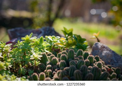 Succulents in a flower bed in the garden