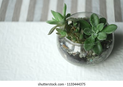 succulents in a glass florarium on a white tile