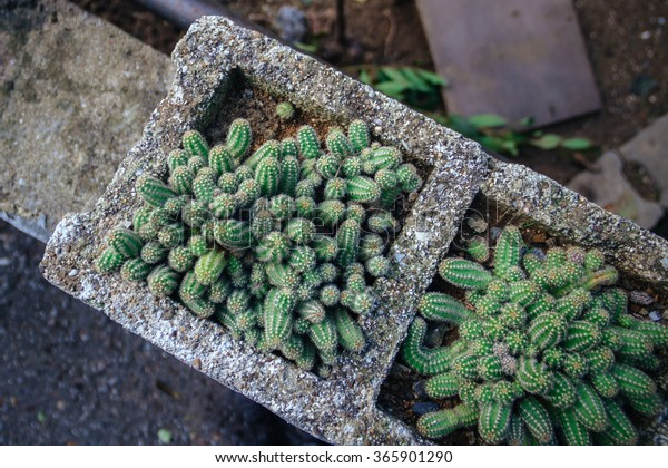 Succulents Outdoors Stock Photo Edit Now 365901290