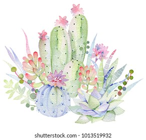 Succulents painted in watercolor. Hand-drawn watercolor green succulent, cactus plants, flowers.