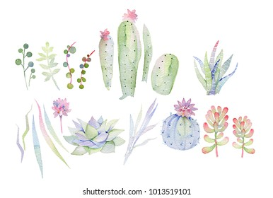 Succulents painted in watercolor. Watercoloe isolated set. Elements for design of invitations, movie posters, fabrics and other objects.
