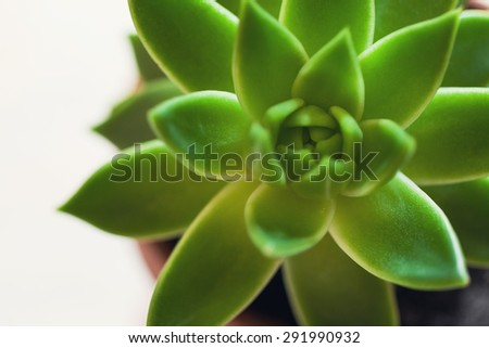 succulents in pot over wooden background. Scandinavian style interior decoration