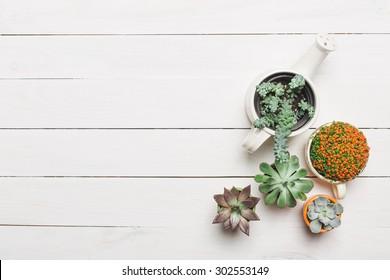 Succulents. Top view