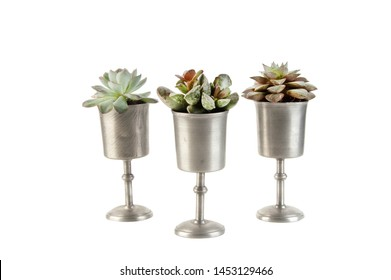 Succulents in vintage pewter goblets on white background. Copy space for text