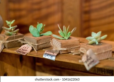 Succulents at Wedding Reception