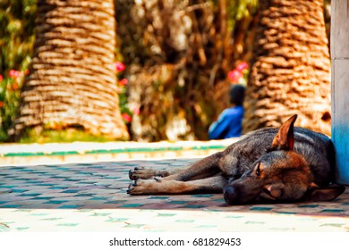 such a poor tired dog sleeping on the street , shot in Tangier , Morocco