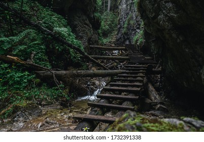 Sucha Bela Canyon with wooden ladders in Slovak Paradise National Park after rain.
