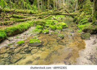 Sucha Kamenice river