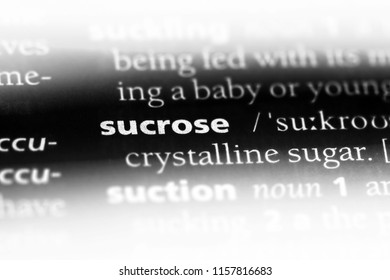 sucrose word in a dictionary. sucrose concept.
