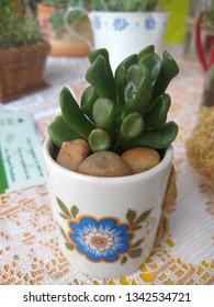 Suculent art in pot