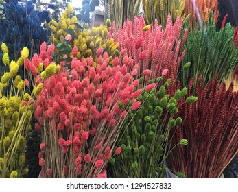 suculent, cactus flower plant suculent sucullent succulent