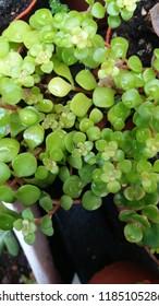 Suculent little garden plant