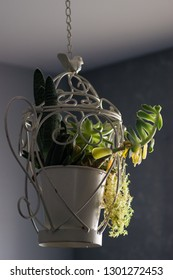 Suculent plant hanging from the ceiling