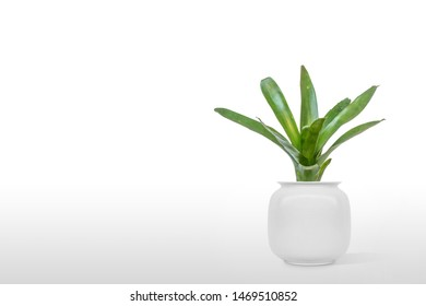 Suculent plant isolated on white background vase ornament