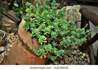 Suculents in pot in garden
