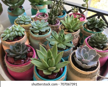 Sucullents and cactuses in colorful pots
