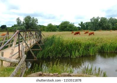 Sudbury Meadows, Suffolk
