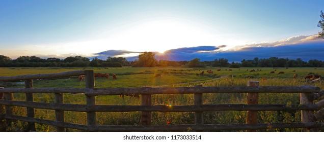 Sudbury Water Meadows High Summer