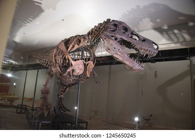 Sue the most complete Tyrannosaurus Rex, T Rex dinosaur fossil statue in the world, on display at the Field Museum, Chicago, IL June 21, 2018