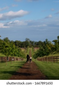Suffolk/UK - 05 23 2019 - A woman and her horse walk away from the camera along a tree line path towards a paddock.