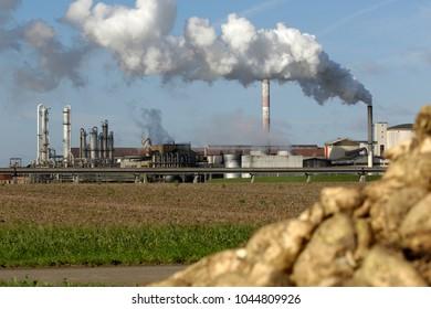 sugar beet processing plant