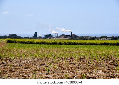 Sugar cane factory with sugarcane fields