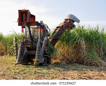 Sugar cane farm - Mechanical harvesting sugar cane field - Truck and combine harvesting sugar cane field - sugar cane plantation