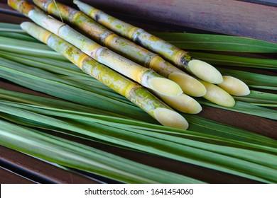 sugar cane  cane farm sugarcane plantation  - Shutterstock ID 1641454060