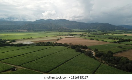 Sugar Cane Fields, Valle Del Cauca, Colombia