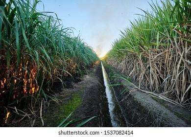 Sugar cane fire burning in field with farmers in regional Australia