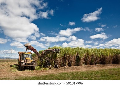 Sugar cane harvesting in Queensland, Australia.