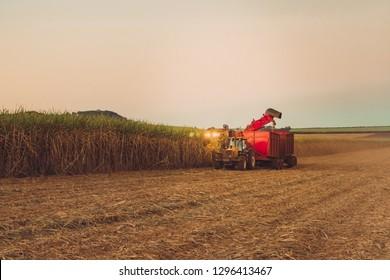 Sugar cane hasvest plantation in Brazil