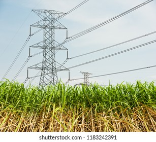 Sugar cane with high voltage lines