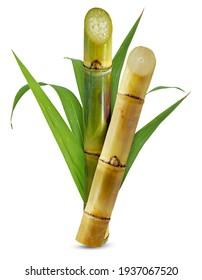Sugar cane isolated on white background
