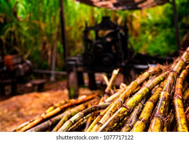 Sugar cane macro at old distillation machinery in outdoor organic rum, aguardiente distillery jungle of Iquitos, Peru, South America