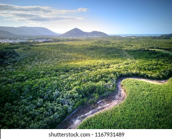 Sugar cane and mangroves near Cairns, Queensland, Australia. August 2018.