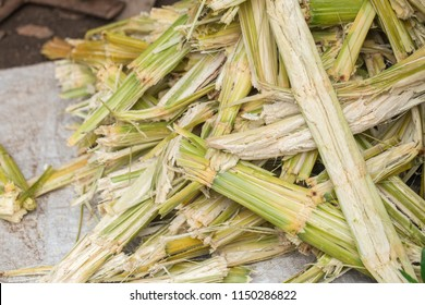 Sugar cane natural cellulose fibers and source of Ethanol biofuel production