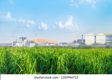 Sugar Cane Processing Images, Stock Photos & Vectors | Shutterstock