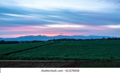 sugar cane plantation in the foreground while sun is setting behind the mountains of Guadeloupe