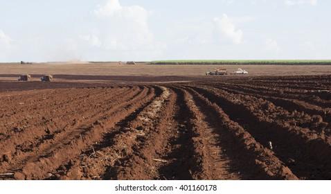 sugar cane plantation harvest