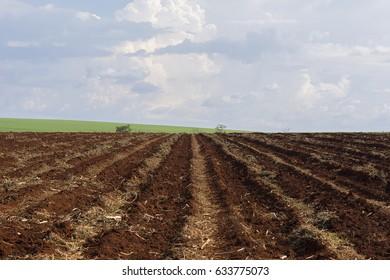 sugar cane plantation and plowed land
