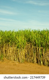 Sugar Cane Plantation in South-West Brazil for production of Sugar or Ethanol or Alcohol