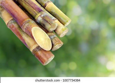 Sugar cane, Cane, Sugarcane piece fresh, sugar cane on green nature bokeh background, Sugarcane agriculture