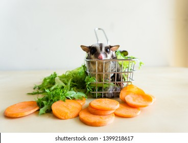 Sugar Glider in the basket with carrot and green vegtables around.