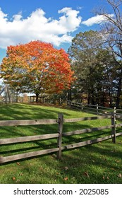 Sugar maple in fall foliage with fence in foreground.
