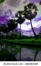 sugar palm sky