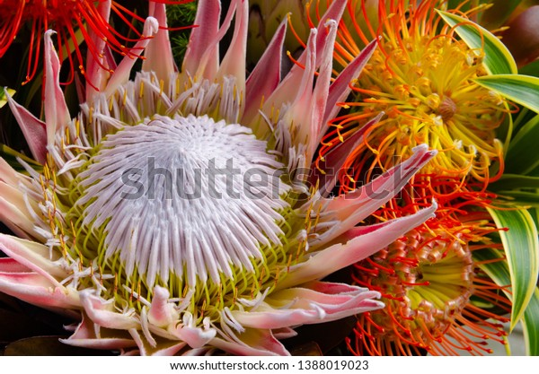 sugarbush-spider-proteas-floral-arrangem